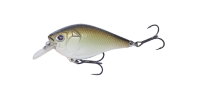 Copper Green Shad